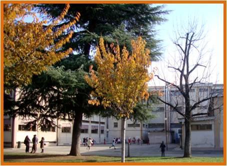 Scuola Busti